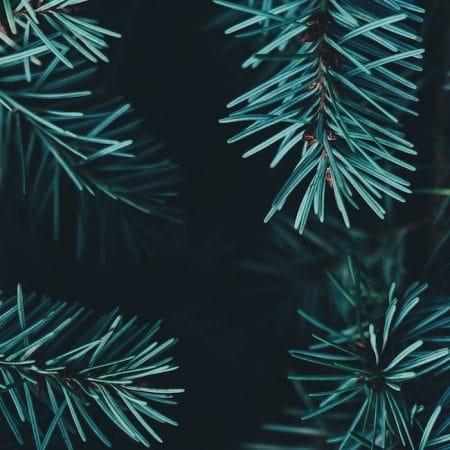Christmas: When God Entered Our Story (John 1:14)